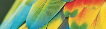ColorSystem